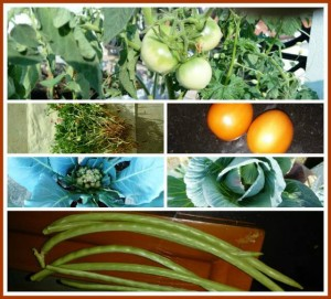 Kitchen Gardening: Pesticide-free Vegetables Throughout the Year