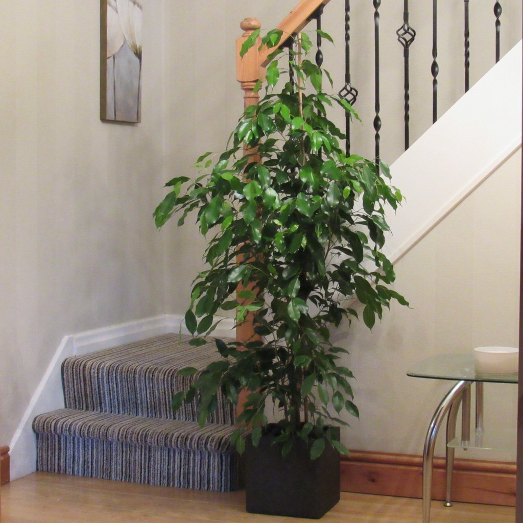 Indoor Houseplants: 11 Best Indoor Plants For Air Purification And So For Good