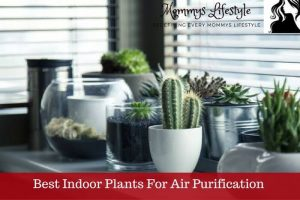 11 Best Indoor Plants For Air Purifation